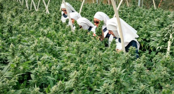Breaking Habits director tells us about his doco's weed-dealing nuns