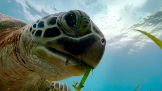 The vital joys of nature documentaries and their jaw-dropping beauty