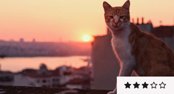 Review: 'Kedi' is Easy-Going in Mood and Pacing