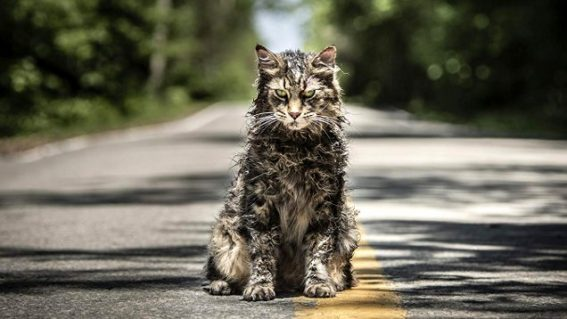 Pet Sematary is a riveting and very gnarly horror movie about love, loss and a freaky puddy tat