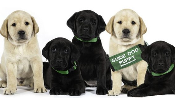Bring your pooch to a dog friendly screening of Pick of the Litter