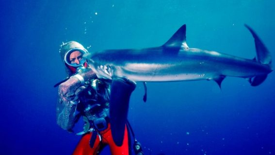 Playing with Sharks: The Valerie Taylor Story is a moving account of an adventurous life